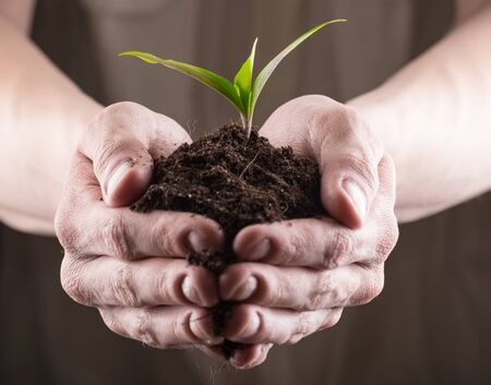 fertile: Man holding bunch of fertile soil in hands with young green sprout on top of it