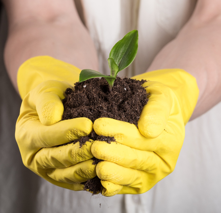 fertile: Man in rubber gloves holding bunch of fertile soil in hands with young green sprout on top of it