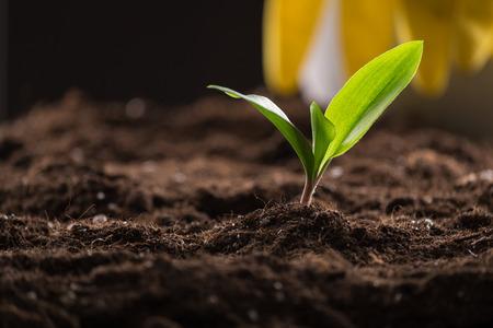 Grüne junge sprießen in fruchtbaren Boden wachsen mit Gießkanne und Gummihandschuhe auf den Hintergrund
