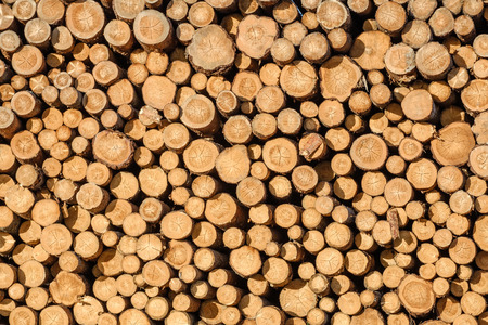 Wall of stacked wood logs as background Stock Photo