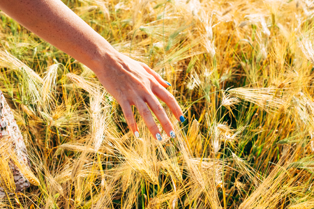 Woman hand touching golden wheat. Harvesting concept