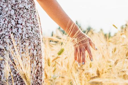 Woman hand touching golden wheat. Harvesting concept Foto de archivo - 117440703