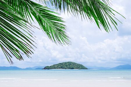 View of nice tropical palms. Holiday and vacation concept