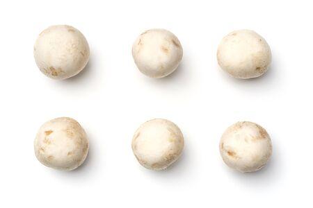 Mushroom champignon isolated on white background. Top view 版權商用圖片