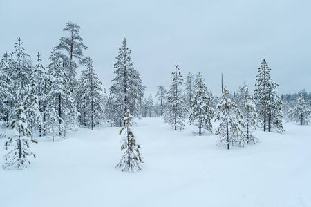 Winter beautiful landscape with trees covered with hoarfrost. New Year and Christmas concept with snowy background