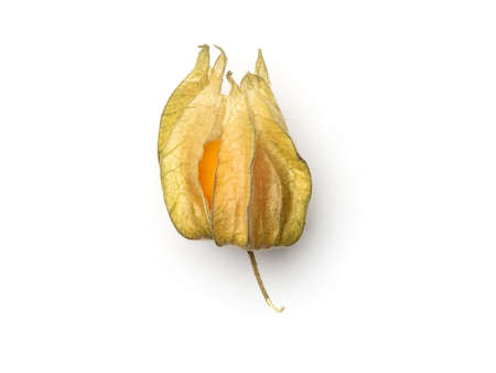Physalis isolated on white background. Top view of golden berry