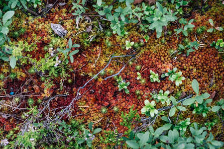 Red moss in the forest. Nature background Stock Photo