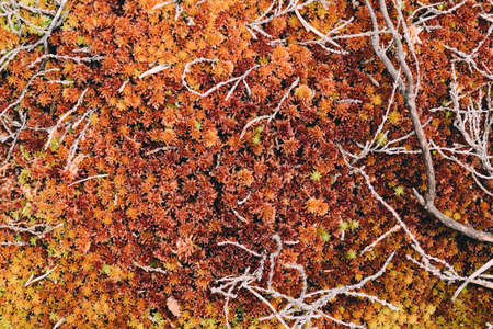 Red moss in the forest. Organic nature background
