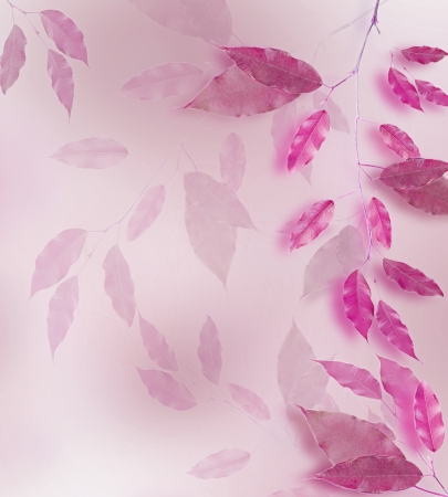 Pink leaves border over blured background photo