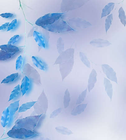 Blue leaves border over blured background photo