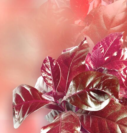 Bright red leaves over blured background photo