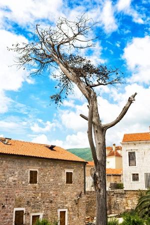toter baum: Toter Baum in der Mitte der Stadt
