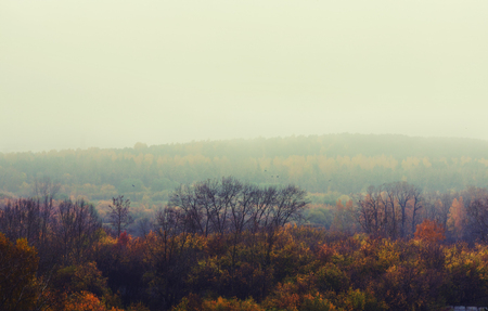 depressive: Autumn, foggy, spooky and  depressive forest landscape Stock Photo