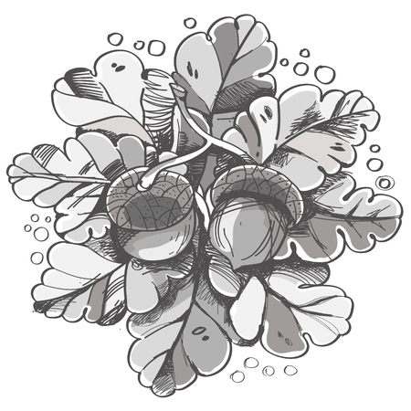 acorn: Pattern in doodle style, vector illustration oak leaves and acorns