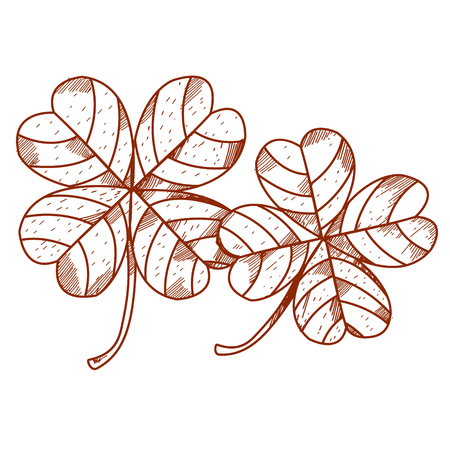 fourleaf: Four-leaf clover.