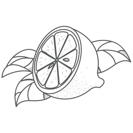 Half of lemon logo. Half of lemon logo. Outline drawing of citrus.