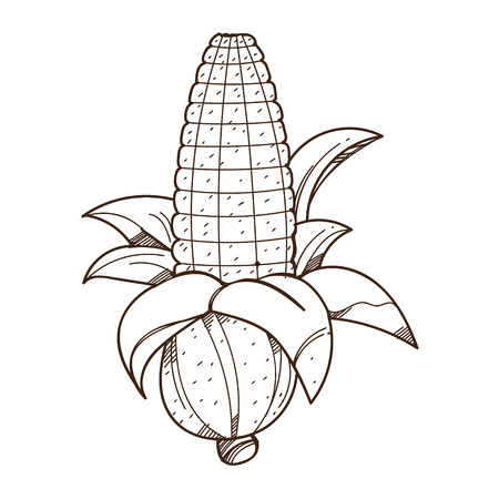Ear of corn logo. Outline drawing for coloring on farming, growing of plants. Illustration