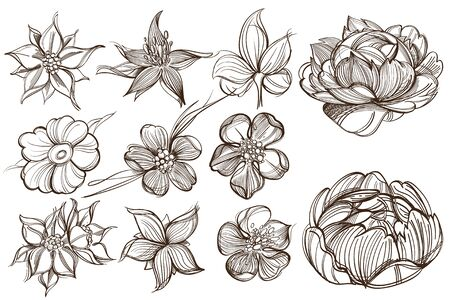 Botanical graphics. Peonies. A set of illustrations with buds, blossoming flowers and leaves.