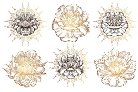 A set of illustrations with buds, blossoming flowers and leaves.