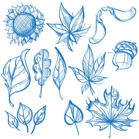 Big outline set of leaves. Labels for design autumn party and various items 矢量图像