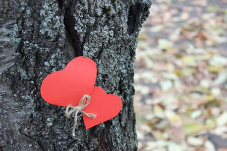 tree linked: Two red paper heart on the tree