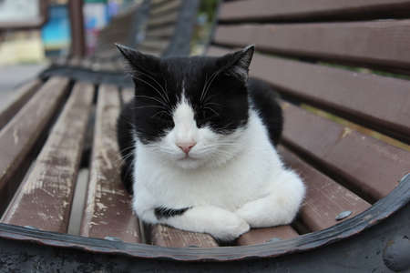bicolor: Black and white cat sleeping on a bench Stock Photo