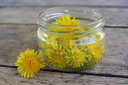 tincture: Yellow dandelion flower in a glass jar with water on the background of the wooden planks. Tincture Stock Photo