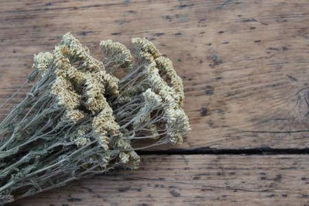 yarrow: Associated dry autumn yarrow on wooden boards