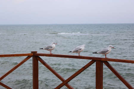Gulls on the background of the sea 写真素材