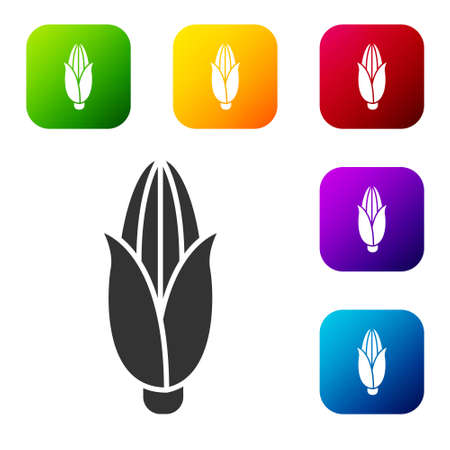 Black Corn icon isolated on white background. Set icons in color square buttons. Vector