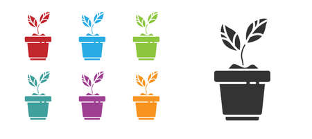 Black Plant in pot icon isolated on white background. Plant growing in a pot. Potted plant sign. Set icons colorful. Vector Illustration. Banco de Imagens - 150551652