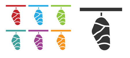 Black Butterfly cocoon icon isolated on white background. Pupa of the butterfly. Set icons colorful. Vector