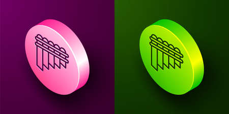 Isometric line Pan flute icon isolated on purple and green background. Traditional peruvian musical instrument. Zampona. Folk instrument from Peru, Bolivia and Mexico. Circle button. Vector