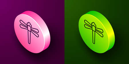 Isometric line Dragonfly icon isolated on purple and green background. Circle button. Vector