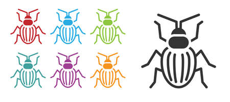 Black Chafer beetle icon isolated on white background. Set icons colorful. Vector