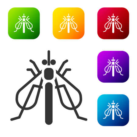 Black Experimental insect icon isolated on white background. Set icons in color square buttons. Vector 矢量图像