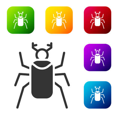 Black Beetle bug icon isolated on white background. Set icons in color square buttons. Vector