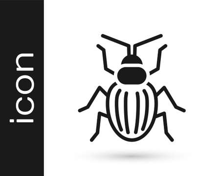 Black Chafer beetle icon isolated on white background. Vector