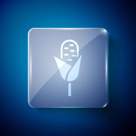 White Corn icon isolated on blue background. Square glass panels. Vector