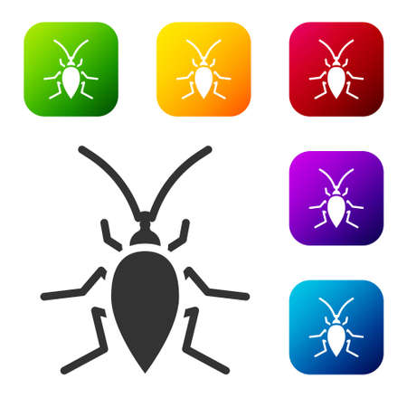 Black Cockroach icon isolated on white background. Set icons in color square buttons. Vector