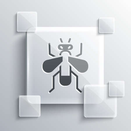 Grey Insect fly icon isolated on grey background. Square glass panels. Vector