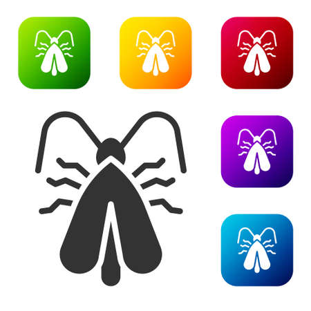 Black   moth icon isolated on white background. Set icons in color square buttons. Vector Illustration