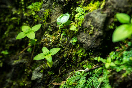 Little green leaves plant on big stone