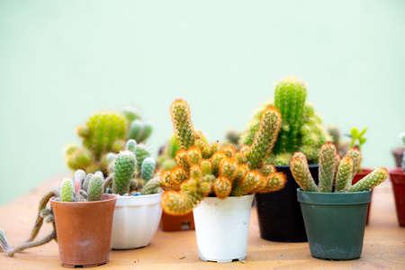 Many cactus pots on the orange table