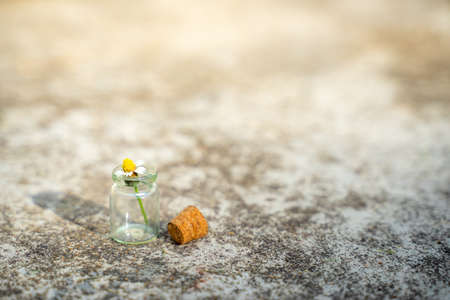 Glass bottles have small flowers on the cement floor.