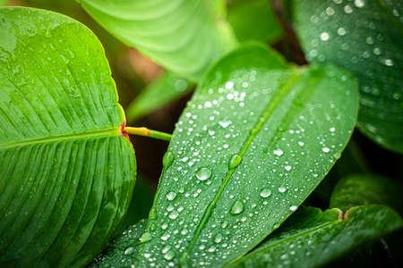 Closeup leaves on a rainy day