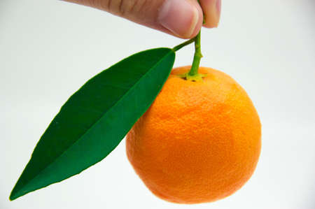 small orange held up by female hand on white background Stock Photo