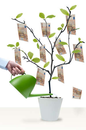 tree trimming: Watering the money tree with 50 Euro notes Stock Photo