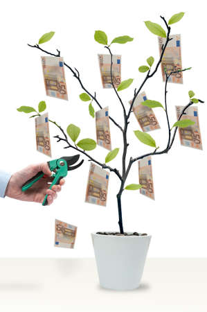 Money tree with 50 Euro ready to harvest