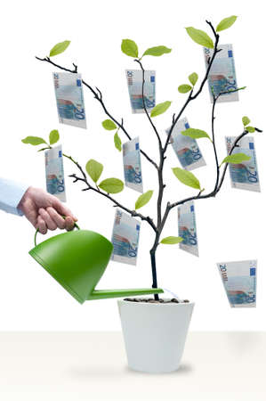 money euro: Watering the money tree with 50 Euro notes Stock Photo
